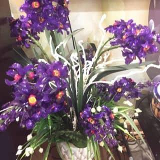 Bình hoa trang trí của hahung8616 tại Hà Nội - 2688738