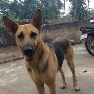 Chó xinh của dx8u tại Hà Nội - 3156363